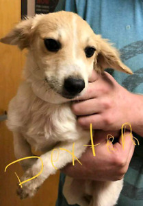 Niagara Dog Rescue - Puppies Are Available!