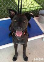 MARIO - Foster & Forever Home Needed!!