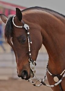 Looking for a western bridle