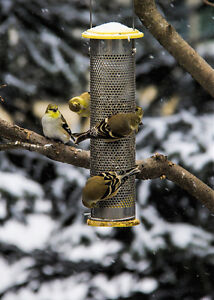 Bird/Squirrel Feeder Package - Multiple products