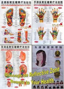 Reflective-Zones-Chart-of-Foot-Hand-Ear-and-Head