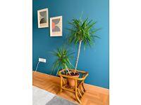 Retro bamboo rattan basket or table base