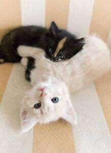 Madame Minous - La gardienne de chats à votre domicile! :)