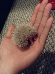Reservationg for baby hedgehogs
