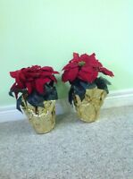Poinsettias x mas decoration---reduced for quick sale