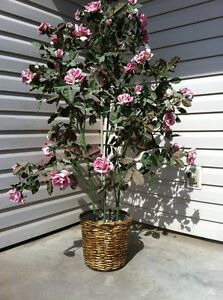 Pink rose silk plant.