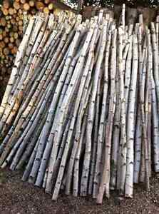 BIRCH POLES/branches-London,Woodstock,Kitchener/Waterloo, Sarnia London Ontario image 1