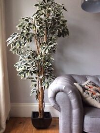 Artificial Tall Ivy Tree Plant RRP £199