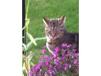 MISSING CAT - FYVIE - please check your outbuildings.