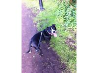 Fun and energetic dog walker available in the Bromsgrove/Droitwich/Redditch area