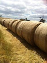 Top quality grass hay Johnsonville East Gippsland Preview