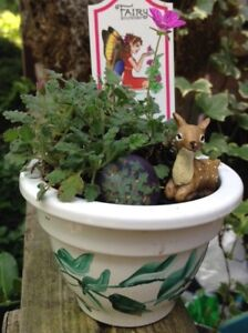 Sweet Mini Fairy Garden With Healthy Pink, Flowering Plant! $12.
