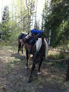 ROCKY MOUNTAIN GELDING - If trail riding is your game!