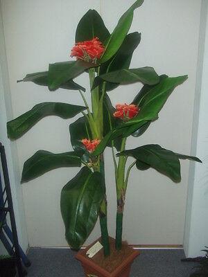 150cm Canna Lily