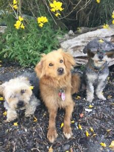 Pet and House Sitting -Cochrane, Canmore, Banff  AB