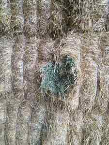 Horse and dairy hay for sale Cornwall Ontario image 3