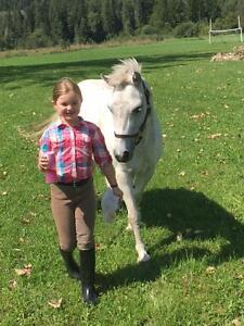 14 year old registered welsh pony
