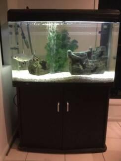 Aqua One Fish Tank