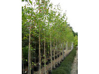 Full time Horticultural Plant Nursery supervisor Customer Service Gravesend Kent