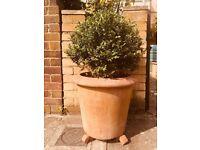 2 large plant pots for sale @£35.00 per pot