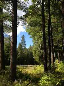 Estate Lot 26.9 acres.  Mature trees. For sale by Owner