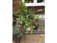 Perennial plants for the garden,joblot, 10x