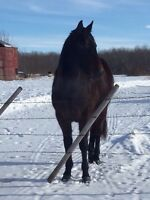 2 year old filly barrel prospect