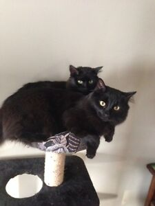 Cats (2 males)