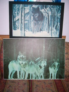 Wolf laminated pictures / Photos de Loups laminées