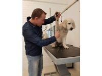 Captain Dog Wash/K9 Dog Salon