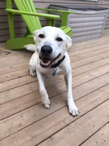 Niagara Dog Rescue - Maple is Waiting For You