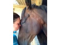 Stunning schoolmistress with fantastic dressage paces