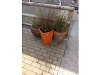 3 large ceramic plant pots and plants for sale