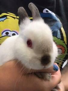 Baby Rabbits Available In-Store Blaxland Blue Mountains Preview