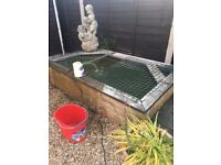 1 x koi carp and approx 7 smaller fish available to good home for the fish