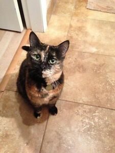 LOST - Female Tortoiseshell Cat in Chilliwack
