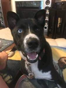 Niagara Dog Rescue - Max Is Looking for the Perfect Home