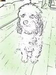 The Scruffy Dog