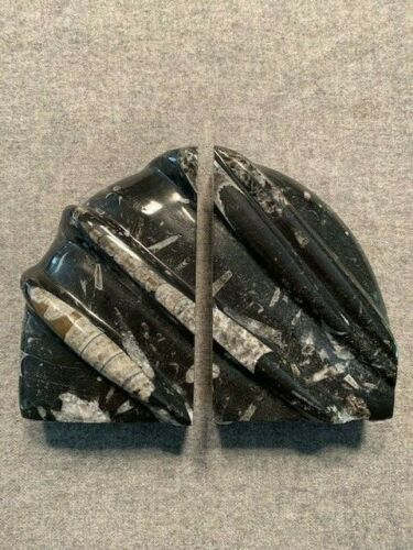 """Orthoceras Fossil Bookends 6"""" x 4"""" Scalloped NICE!!!"""