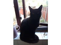 5yr old female cat needs rehoming