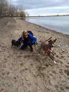 PACK DOG RUNS AND WALKS, NATURE TRAILS- DOWNTOWN, MIDTOWN