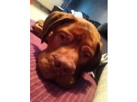 9 month old beautiful boy he's huge very playful loves kids selling as our house is too small
