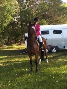 Genuine Performance Horse Margaret River Margaret River Area Preview