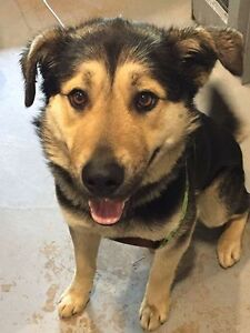 9 month old Ranger is looking for a Foster Home First... Pet Sav