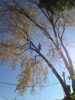 Artio Tree Care And Removal