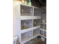 upvc bird breeding cages stunning with drawers and deviders £300