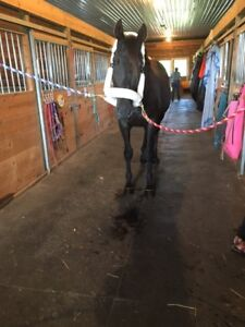 LOOKING TO RENT A PADDOCK OR OFFER HORSE FOR COMPANIONSHIP