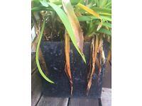 1 x square slate grey garden planter 25cm x 25 cm x 25cm