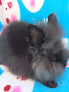 ❤️  HOMES NEEDED FOR BUNNIES ❤️ Several sold!