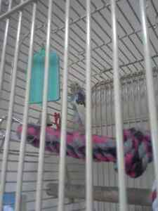 Large Bird cage and budgie for sale